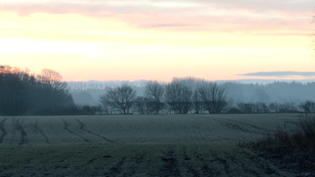 Sunrise over misty grove