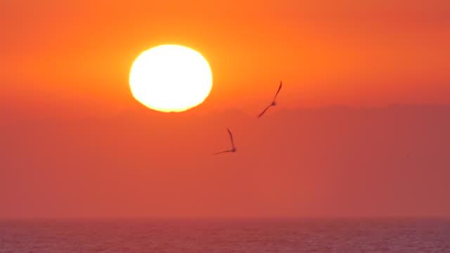sunrise over ocean water off south africa eastern coast - 2匹点の映像素材/bロール