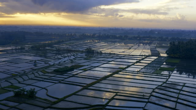 sunrise over rice paddy fields in bali - indonesia video stock e b–roll