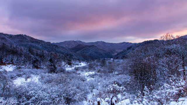 sunrise over snow-covered inje secret garden in gangwon-do - formal garden stock-videos und b-roll-filmmaterial