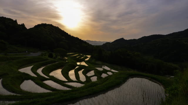 sunrise over terraced rice fields - rice terrace stock videos and b-roll footage