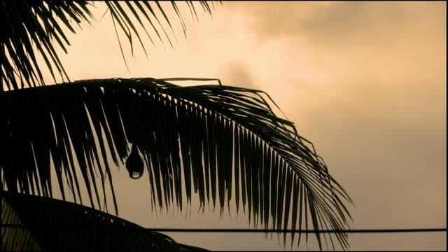T/L Sunrise over the coconut tree with bird's nest on the tree, Thailand