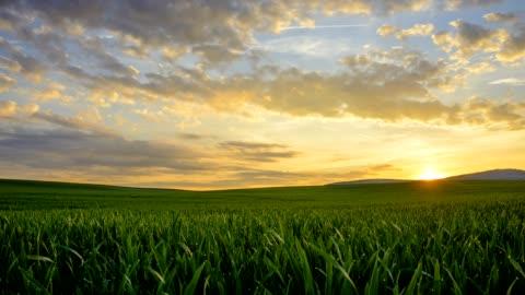 vidéos et rushes de sunrise over wheat field in spring, miltenberg, spessart, franconia, bavaria, germany - champ
