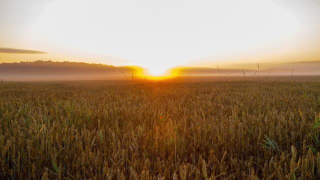 T/L Sunrise over wheat field