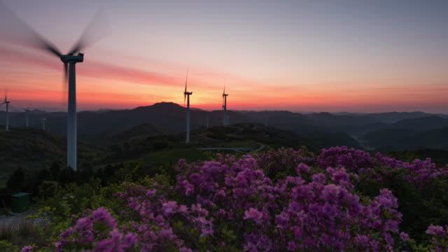 sunrise over wind turbine and royal azaleas in hwalseongsan mountain / yeongam-gun, jeollanam-do, south korea - heather stock videos & royalty-free footage