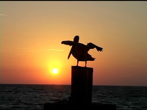 vidéos et rushes de sunrise pelican 4 a - concurrent