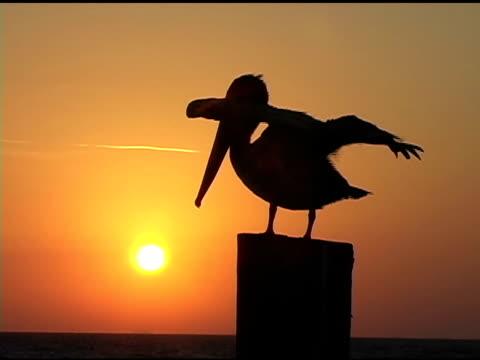 Sunrise Pelican 4 b