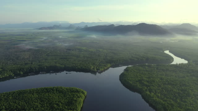 stockvideo's en b-roll-footage met sunrise scene aerial drone view of mangrove forest and canal through the forest in south of thailand - zuid