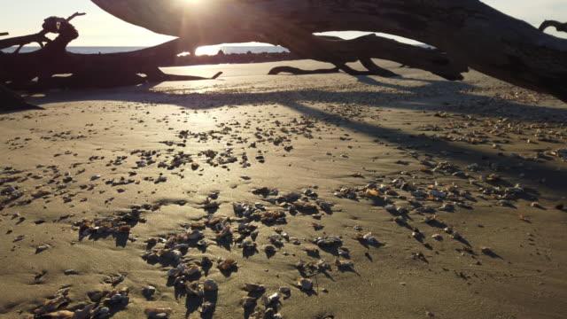 sunrise, seashells and driftwood on jekyll island - 茶色背景点の映像素材/bロール