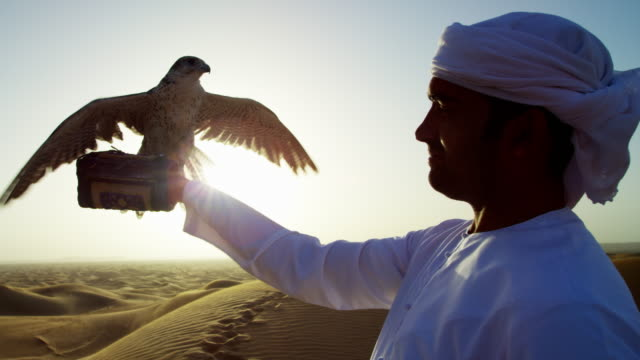 sunrise silhouette arab falconer with bird of prey - bird of prey stock videos & royalty-free footage