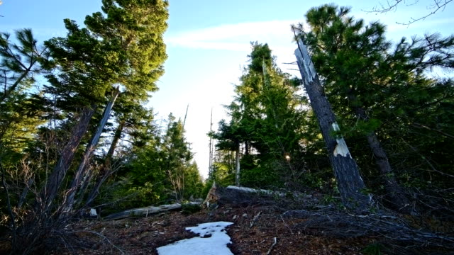 stockvideo's en b-roll-footage met sunrise sunburst flare and forest snow in spring mt. hood - pacific crest trail