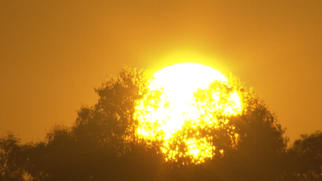 sunrise timelapse - close up bright sun and glare, shining through gum tree tops with clear deep orange and yellow sky brightening. 33 secs repeat 18... - sunrise dawn stock videos & royalty-free footage