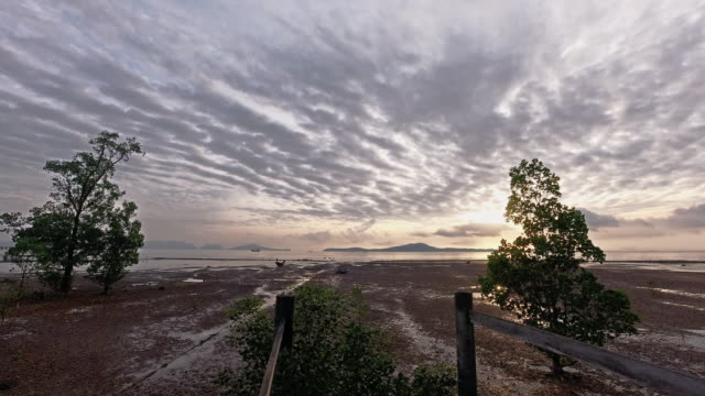 sunrise timelapse mangroves at low tide - low tide stock videos & royalty-free footage