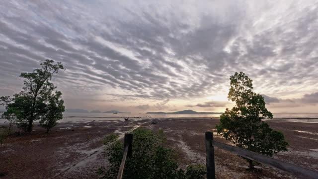 soluppgång timelapse mangrover vid lågvatten - andamansjön bildbanksvideor och videomaterial från bakom kulisserna