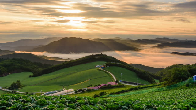 Sunrise view of highland cabbage farm field in Anbandegi Village, Gangwon-do province, South Korea