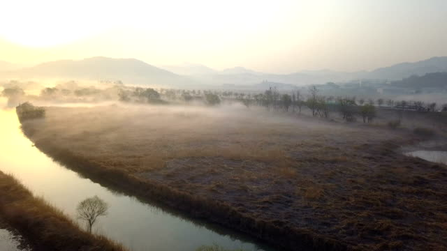 vidéos et rushes de sunrise view of hwapocheon wetland ecological park (habitat for winter migratory birds) in gyeongsangnam-do, gimhae, south korea - arbre sans feuillage