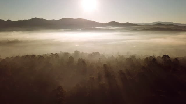 sunrise with the misty pine forest and mountain in the morning , aerial shot - woodland stock videos & royalty-free footage