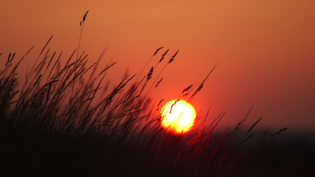 Sunrise with weeds in foreground. Focus shift.