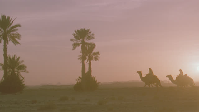 dusk sunrise/sunset 4-riders on camels cross desert r-l, past palm trees - convoy stock videos & royalty-free footage