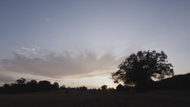 sunset above field with oak tree in foreground / firle, east sussex, united kingdom - silhouette stock videos & royalty-free footage
