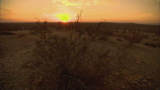 ws sunset above mojave desert, sagebrush in foreground / california, usa - deserto mojave video stock e b–roll
