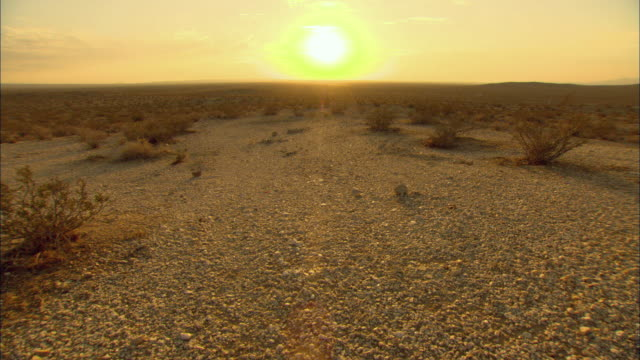 WS Sunset above Mojave Desert with sagebrush / California, USA