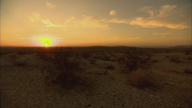 ws sunset above mojave desert with sagebrush / california, usa - セージブラッシュ点の映像素材/bロール