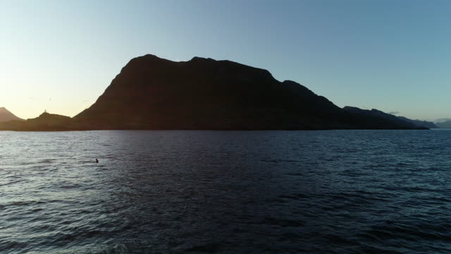 sunset aerial of pod of orcas off lofoten archipelago, norway - cetacea stock videos & royalty-free footage