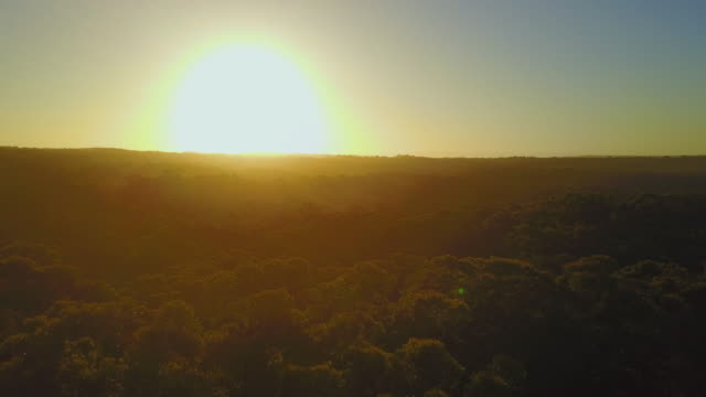 4K Sunset Aerial View Flying upwards with trees in front, Jervis Bay, Australia.