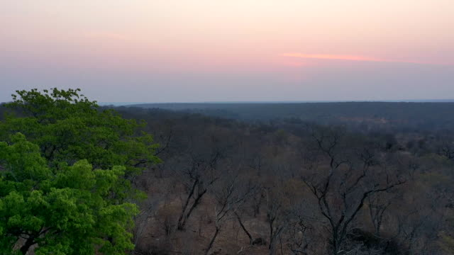 sunset / africa - romantic sky stock videos & royalty-free footage