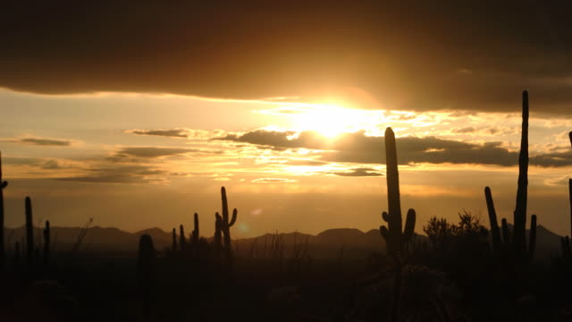 sunset and cactus - cactus sunset stock videos & royalty-free footage