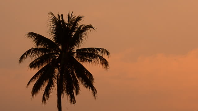 sunset and coconut tree - palm tree stock videos & royalty-free footage