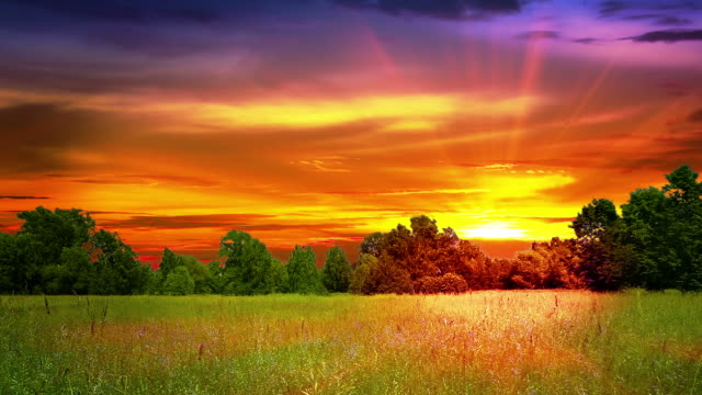 sunset and meadow - meadow stock videos & royalty-free footage