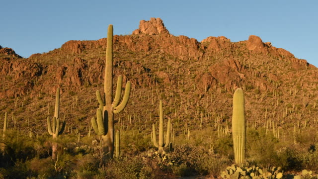 Sunset and Saguaro Cactus, Time Lapse