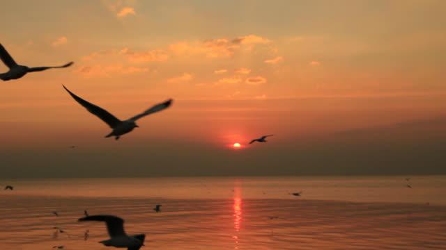 Sonnenuntergang und Möwe