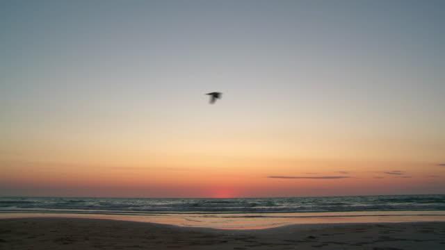 hd :「ケーブルビーチの夕暮れ - カモメ科点の映像素材/bロール