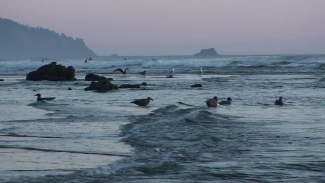 vídeos y material grabado en eventos de stock de atardecer en la playa de oregon - costa de oregón