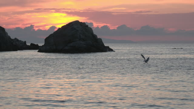 sunset at rocky coast and a gull lands on the sea - island of elba stock videos & royalty-free footage