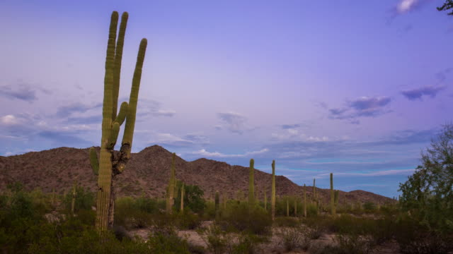 sunset at saguaro national monument - arid climate stock videos and b-roll footage