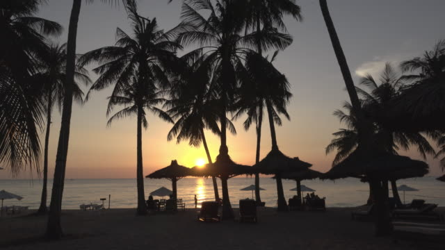 sunset at sea with palm trees at long beach - palapa stock videos & royalty-free footage