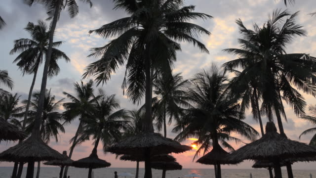 td / sunset at sea with palm trees at long beach - palapa stock videos & royalty-free footage