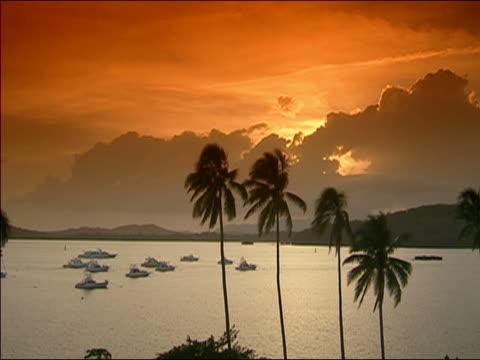 ws sunset at seashore, panama - fächerpalme stock-videos und b-roll-filmmaterial