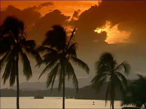 ms sunset at seashore, panama, ws - fächerpalme stock-videos und b-roll-filmmaterial