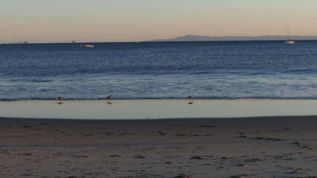 4k sunset at the beach sandpiper on the surfs edge - sandpiper stock videos & royalty-free footage