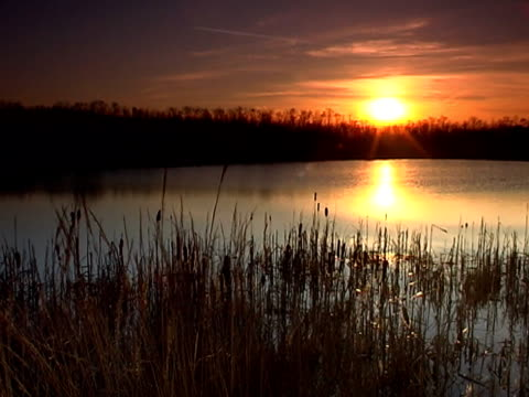 sunset at the lake pal - reed grass family stock videos and b-roll footage
