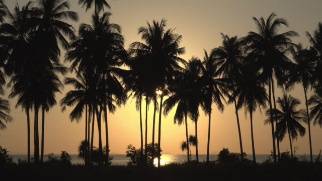 vidéos et rushes de sunset at the sea with palm trees - palmier