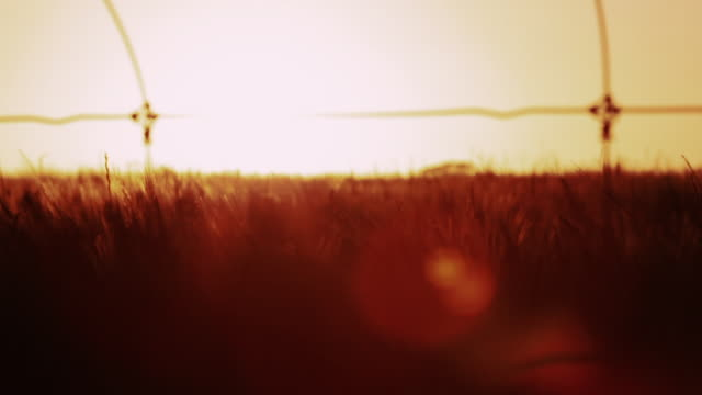 sunset australian outback - fence stock videos and b-roll footage