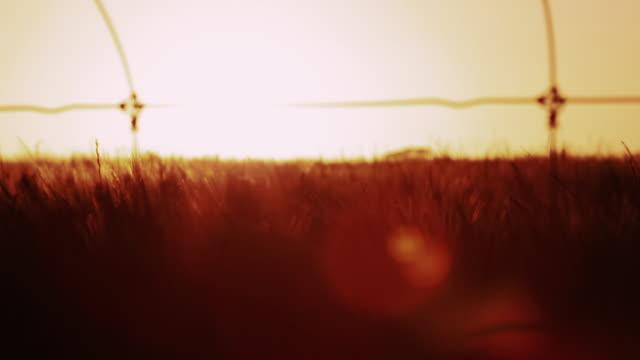Sunset Australian Outback