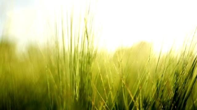 夏の背景-サンセット - 草地点の映像素材/bロール
