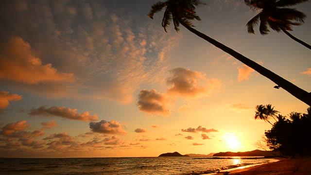 vídeos y material grabado en eventos de stock de atardecer en la playa con palmeras en el centro de la isla - full hd format